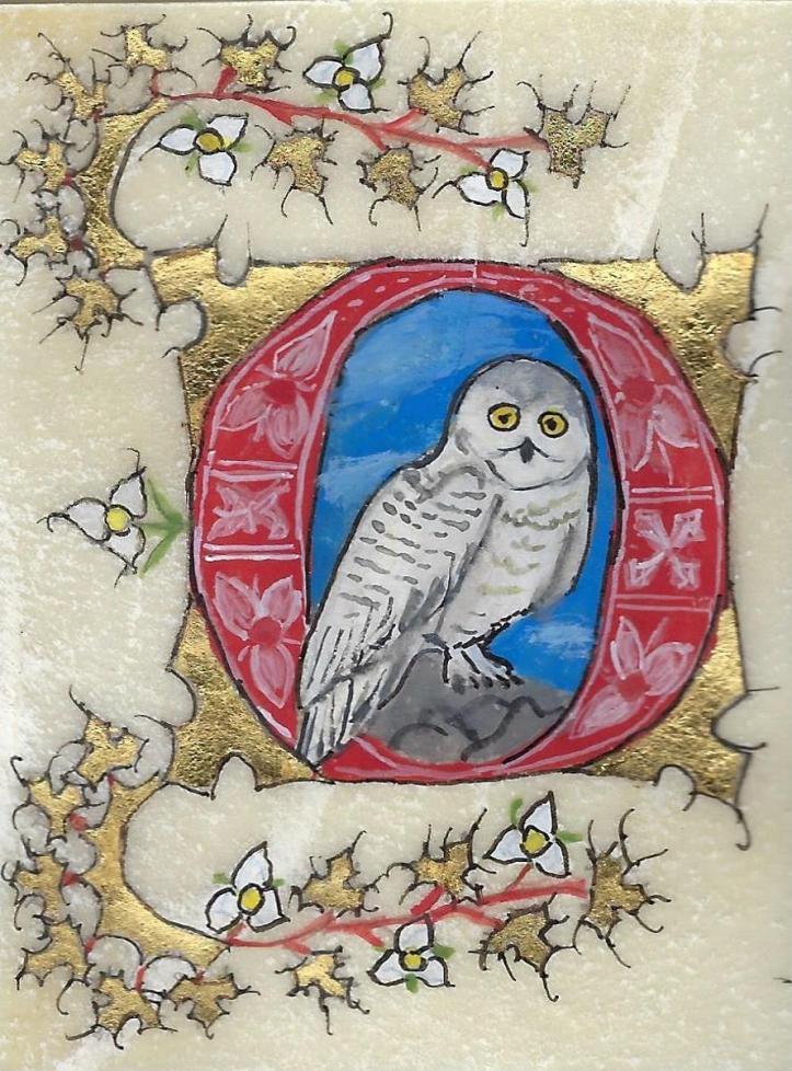 scribal owlA